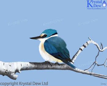 New Zealand Sacred Kingfisher or Kotare