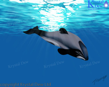Maui Dolphin Digital Artwork