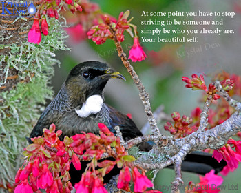 Your Beautiful Self, A tui in the cherry blossom in  spring.