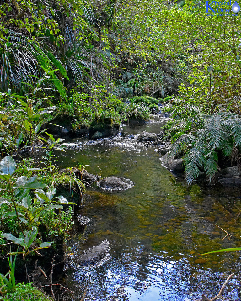 Forest Stream At Pukeiti