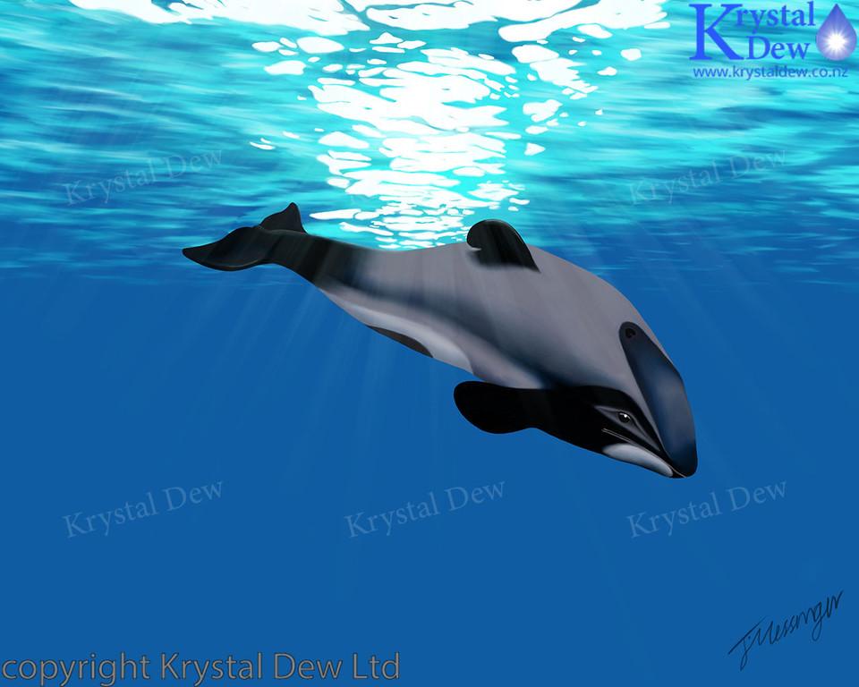 Maui Dolphin Digital Artwork