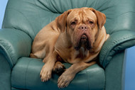 How to Clean Pet Urine from Leather Furniture