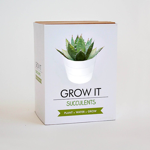 Gift Republic Grow It Succulents