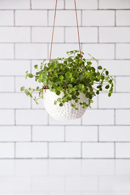 Burgon & Ball Ceramic Hanging Pot with Dimpled Surface & Leather Cord