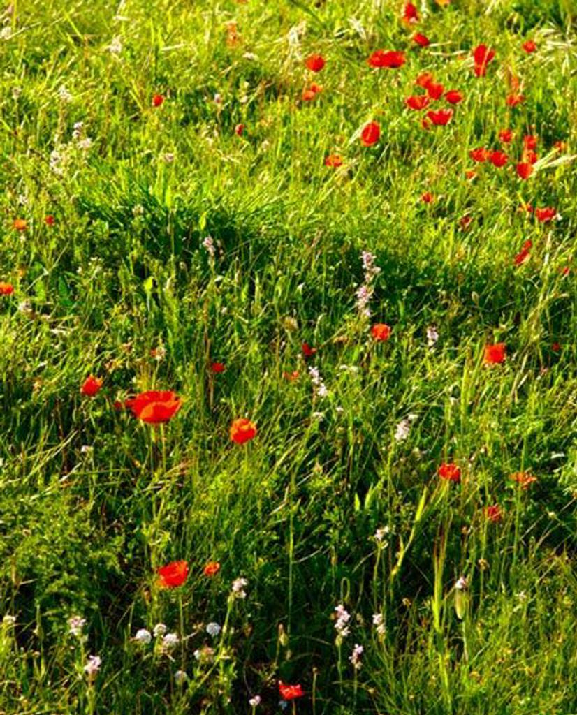 St Tropez Wild Flowers - Fraicheur Tropezienne French Room Spray
