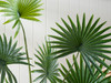 Fan Palm Artificial Plant
