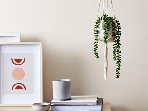 Hanging Pea Succulent in White Pot