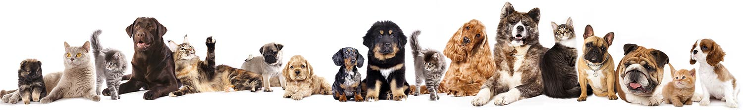 A large line-up of various breeds of cats and dogs sitting and standing looking at the camera