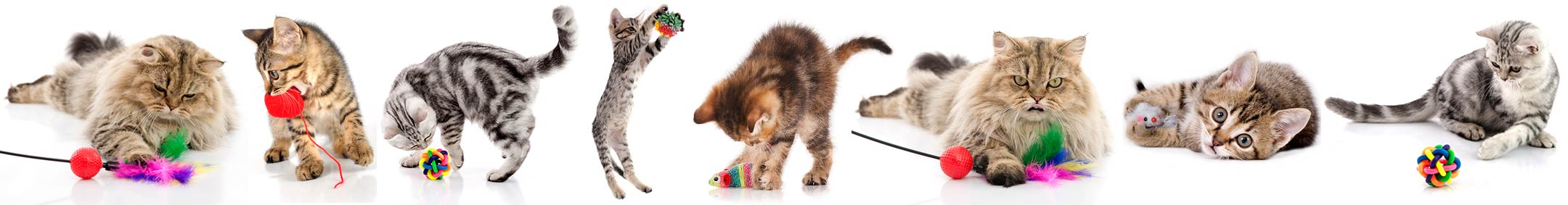 A Bunch of Cats and Kittens playing with chaser toys and catnip balls