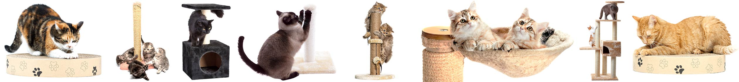 Multiple cats sctaching and playing on cat scratchers