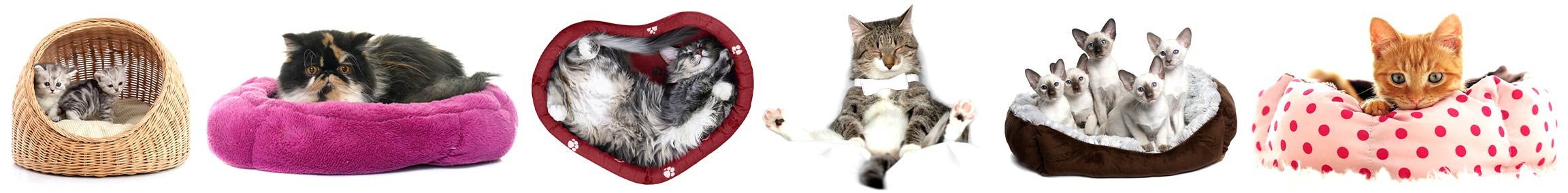 Cute cats and kittens sleeping on cat beds