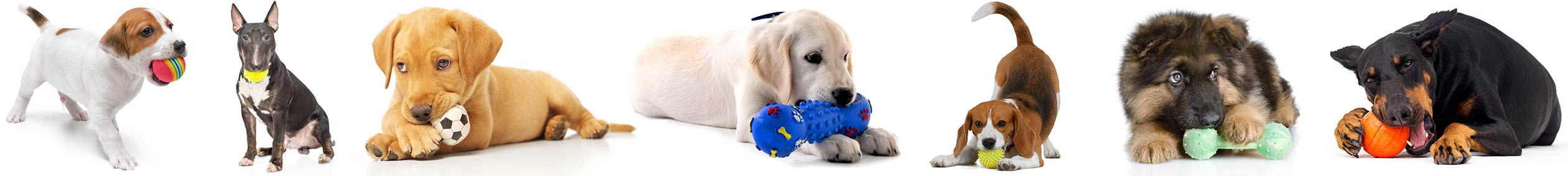 Cute Dogs playing with squeaky chew toys