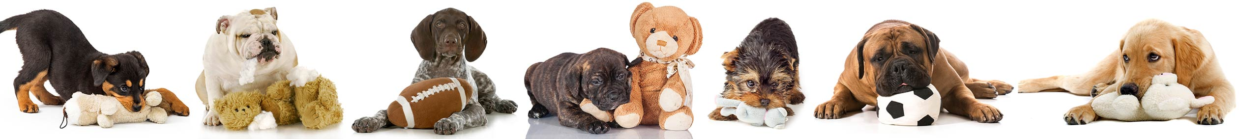 Cute dogs and puppies plying with plush toys