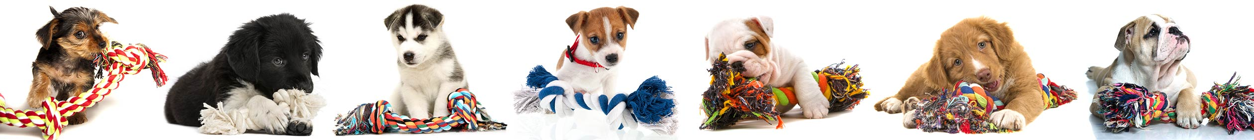 Cute dogs and puppies playing and chewing on rope toys