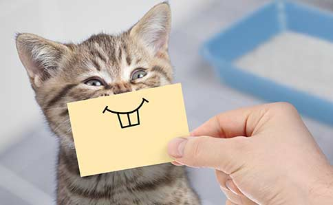 Funny cat with funny teeth
