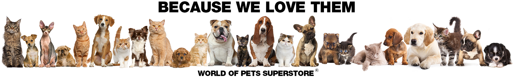 A whole bunch of cats and dogs because we love them