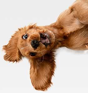 Playful Puppy Dog