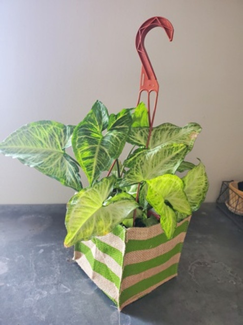 Hanging House Plant