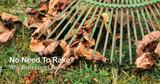 Put the Rake Away – Let Birds Enjoy Leaf Litter