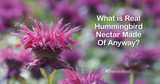 """What Is """"Real"""" Hummingbird Nectar Made Of Anyway?"""