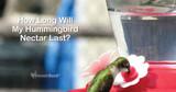 How Long Will My Hummingbird Nectar Last?
