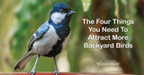 The Four Things You Need to Have to Attract More Backyard Birds
