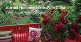 Add Red to Your Hummingbird Garden (Without Adding it to Your Nectar)