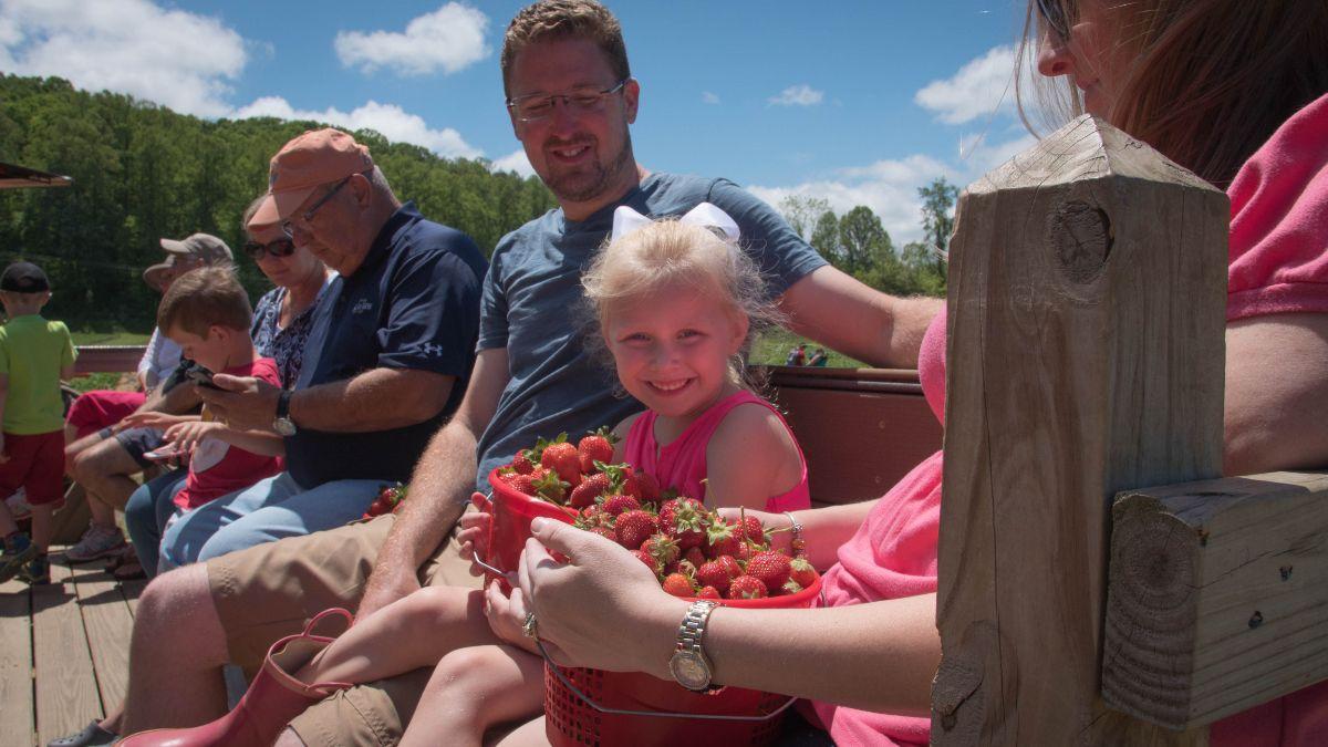 strawberry-season-at-mercier-orchards-compressor.jpg