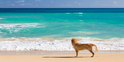 Cue Vapor's Dog Days of Summer are Here!