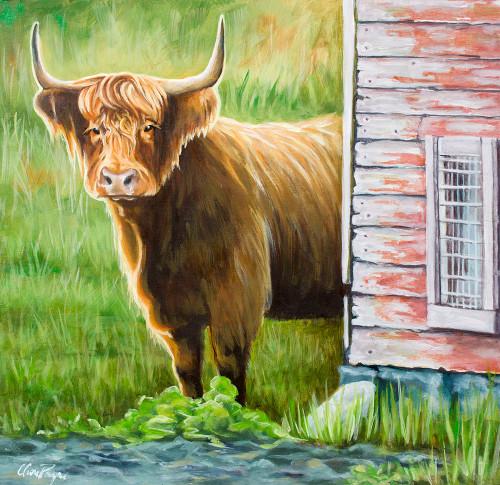 Steer Behind Old Barn Door