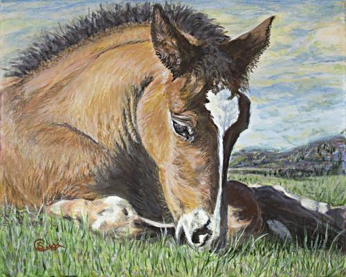 Bay Foal Resting - Print