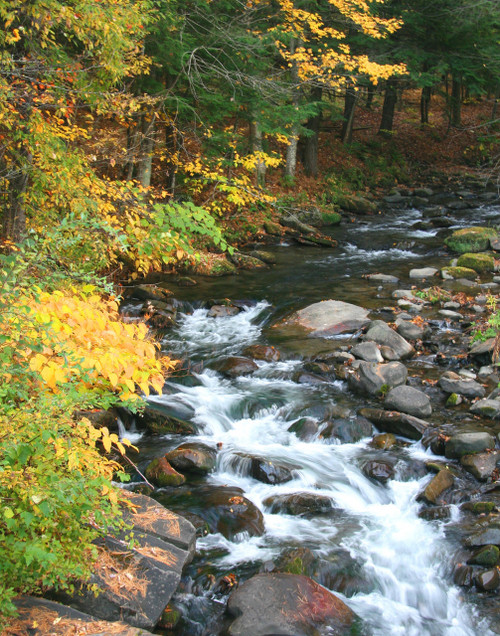 Autumn Stream - Woodstock, VT