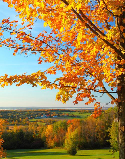 Autumn View - Saint Albans, VT