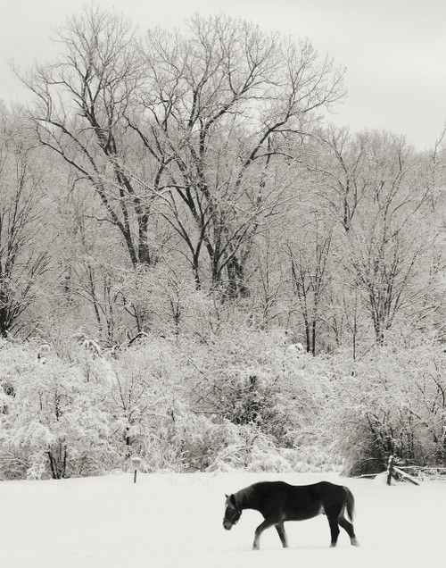 Black and White Beauty - Saint Albans, VT