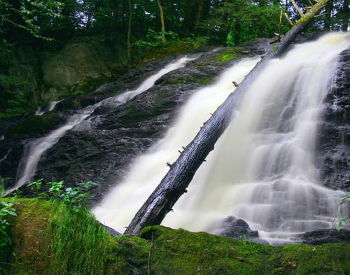 Dead Creek in Summer - Swanton, VT