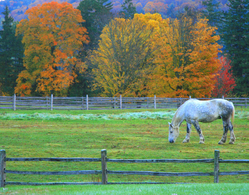 Foliage Pasture - Woodstock, VT