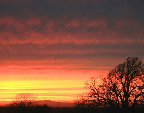 Red Oak Sunset - Saint Albans, VT