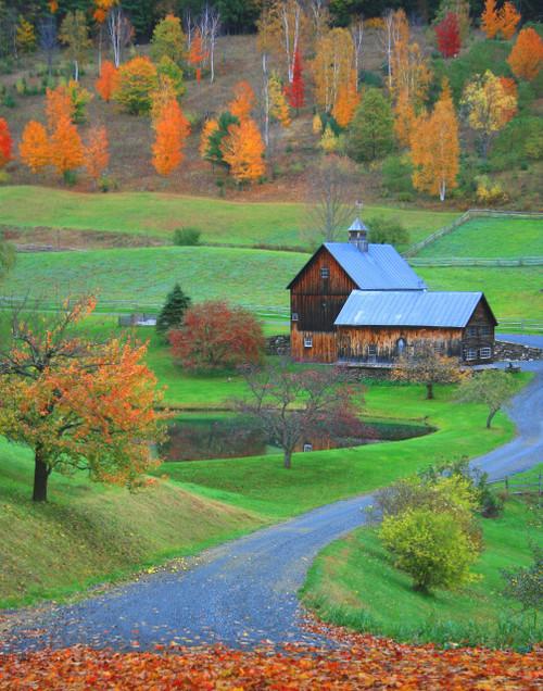 Sleepy Hollow Leaves - Pomfret, VT
