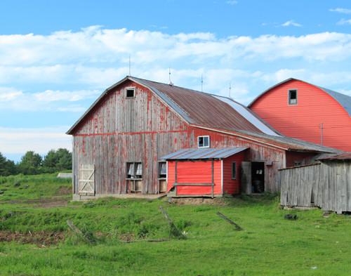 Summer Farm Yard - Sheldon, VT