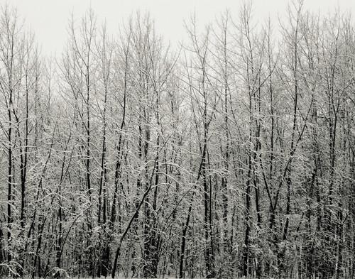 Winter Contrast - St. Albans, VT