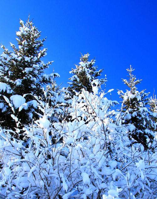 Winter Wonderland - Enosburg, VT