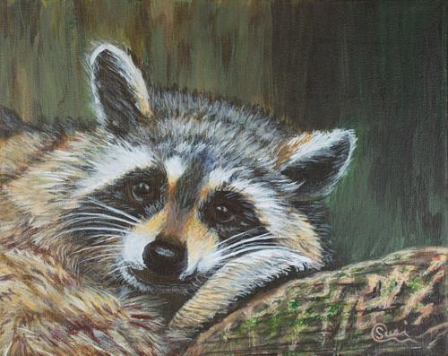 Raccoon Rascal