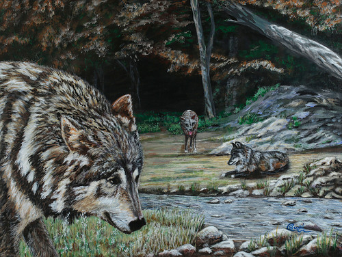 Three Pack Wolves