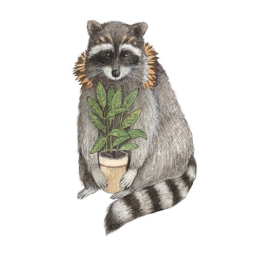 Critters and Plants: The Raccoon