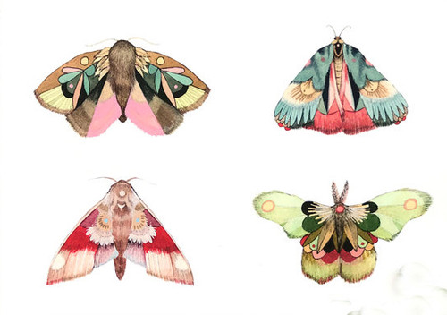 Collector: Moths Part 2