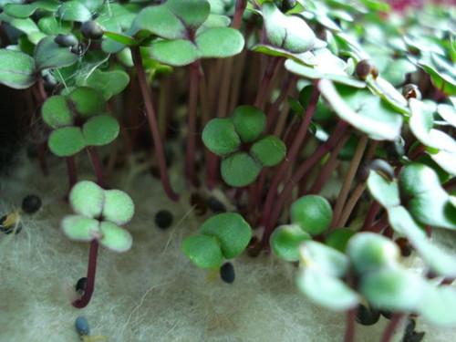 Biostrate Felt Growing Pads - Each