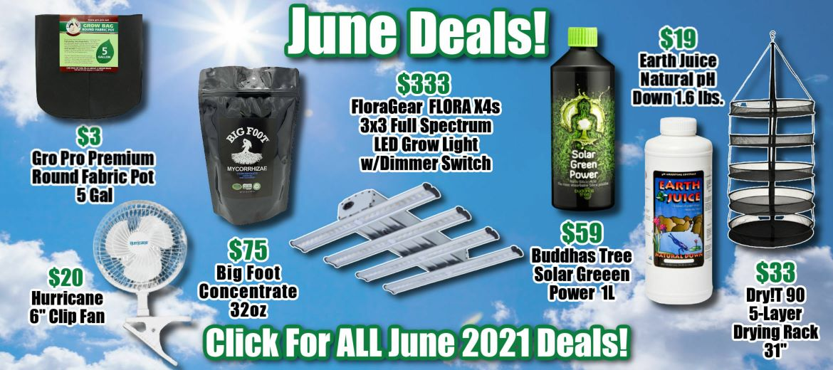 Monthly Specials for June