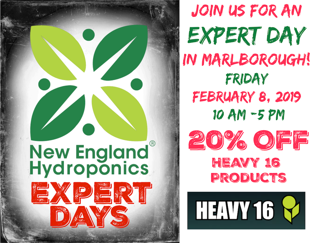 February 8 Expert Day in Marlborough Featuring Heavy 16