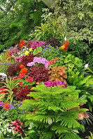 Tropic flower fragrances sample decant