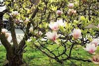 Magnolia - A Begininer's Sample Set (sampler pack)